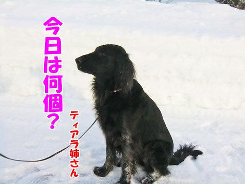 チャンスとティアラ+ココ-20130215-3-500.jpg
