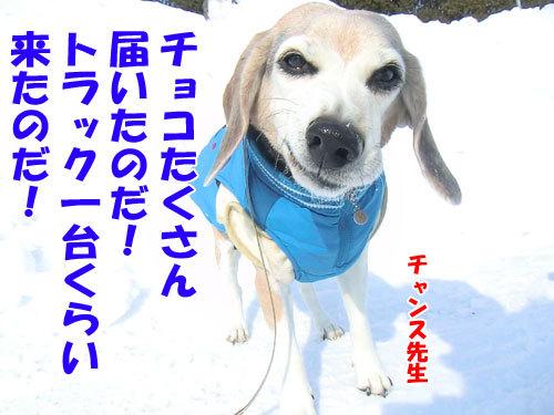 チャンスとティアラ+ココ-20130215-4-500.jpg