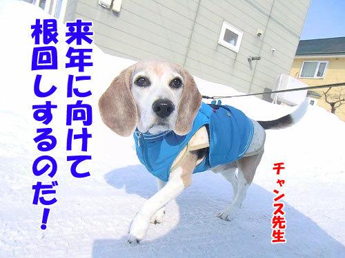チャンスとティアラ+ココ-20130215-8-500.jpg