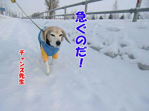 チャンスとティアラ+ココ-20120217-1-500.jpg