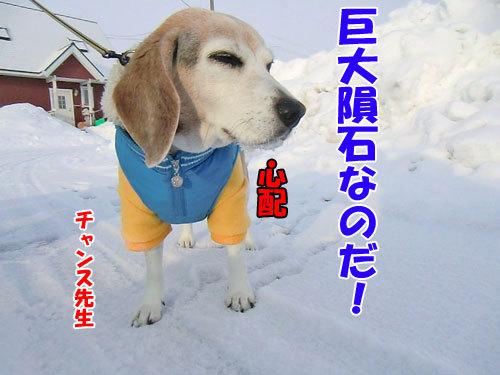 チャンスとティアラ+ココ-20120217-3-500.jpg