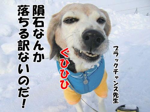 チャンスとティアラ+ココ-20120217-6-500.jpg