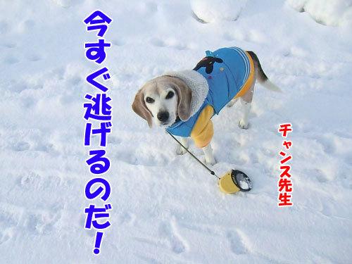 チャンスとティアラ+ココ-20120217-7-500.jpg
