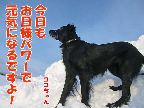 チャンスとティアラ+ココ-20130218-1-500.jpg