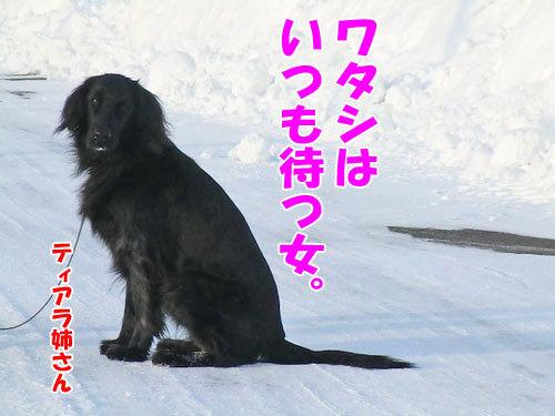 チャンスとティアラ+ココ-20130218-4-500.jpg