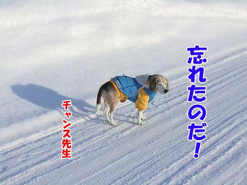 チャンスとティアラ+ココ-20130218-6-500.jpg