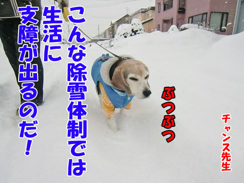 チャンスとティアラ+ココ-20130219-2-500.jpg
