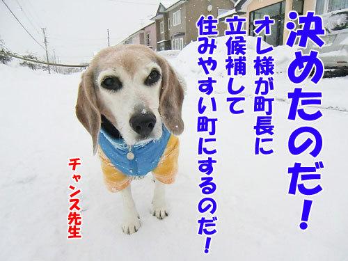 チャンスとティアラ+ココ-20130219-4-500.jpg