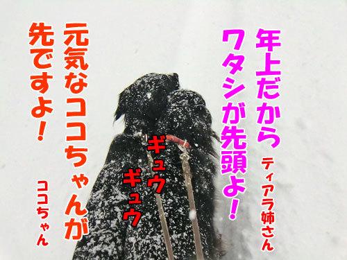 チャンスとティアラ+ココ-20130219-5-500.jpg