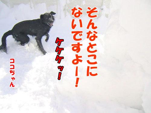 チャンスとティアラ+ココ-20130222-4-500.jpg