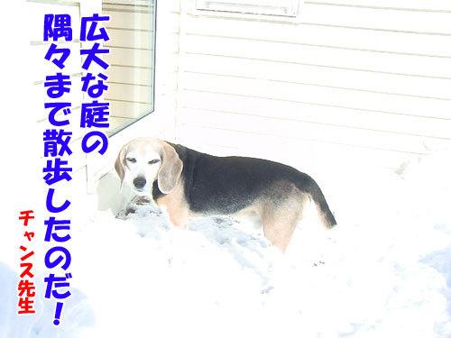 チャンスとティアラ+ココ-20130222-8-500.jpg