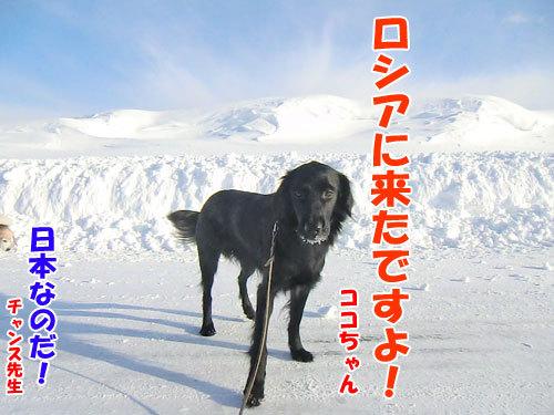 チャンスとティアラ+ココ-20130223-1-500.jpg