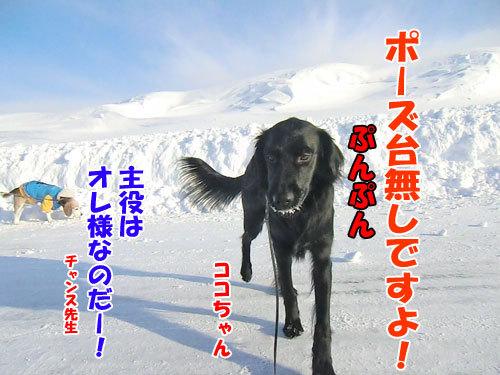 チャンスとティアラ+ココ-20130223-2-500.jpg