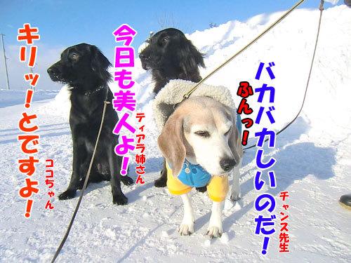 チャンスとティアラ+ココ-20130225-1-500.jpg
