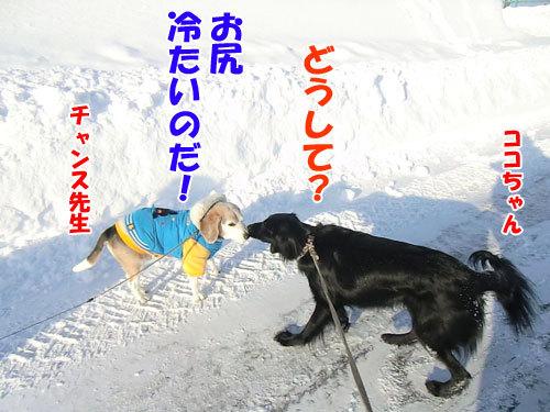 チャンスとティアラ+ココ-20130225-3-500.jpg