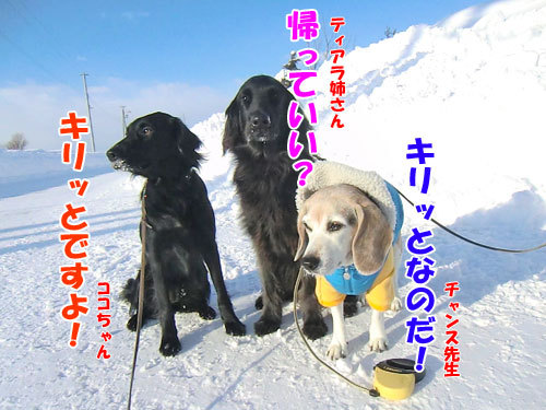 チャンスとティアラ+ココ-20130225-5-500.jpg