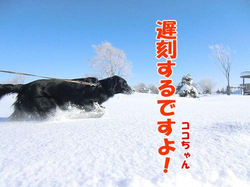 チャンスとティアラ+ココ-20130226-5-500.jpg