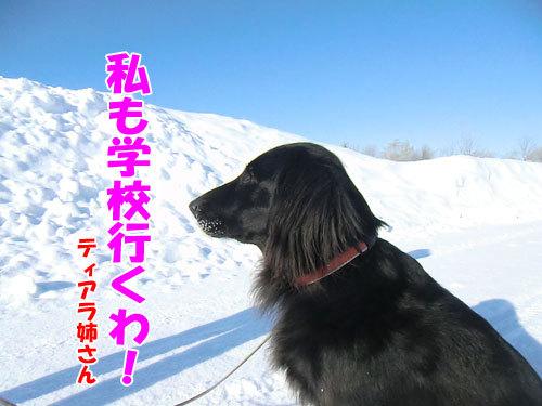 チャンスとティアラ+ココ-20130226-7-500.jpg