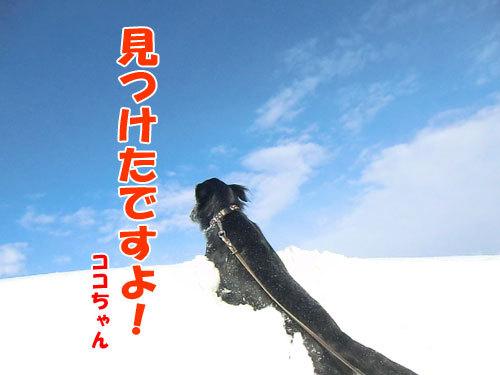チャンスとティアラ+ココ-20130227-1-500.jpg
