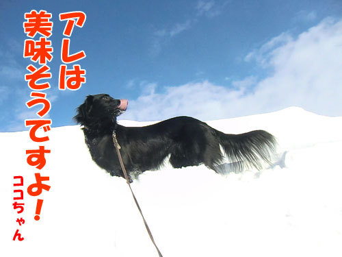 チャンスとティアラ+ココ-20130227-2-500.jpg