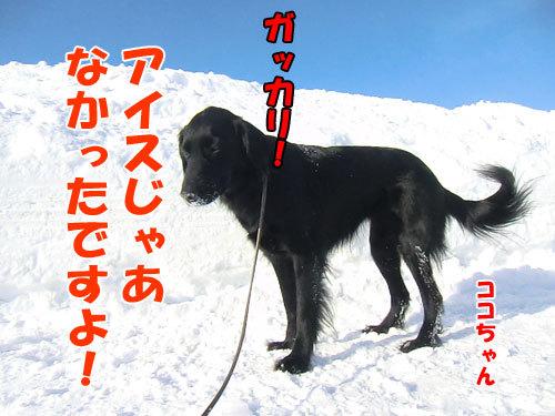 チャンスとティアラ+ココ-20130227-4-500.jpg
