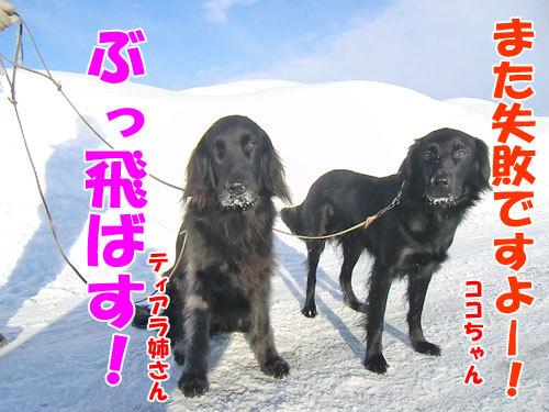 チャンスとティアラ+ココ-20130227-6-500.jpg