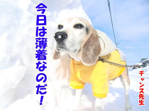 チャンスとティアラ+ココ-20130301-1-500.jpg