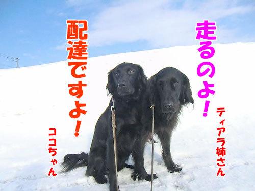 チャンスとティアラ+ココ-20130301-3-500.jpg