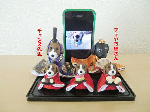 チャンスとティアラ+ココ-20130303-1-500.jpg