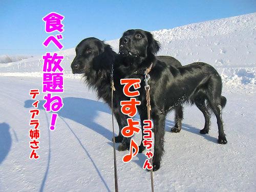 チャンスとティアラ+ココ-20130303-2-500.jpg