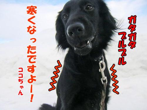 チャンスとティアラ+ココ-20130303-4-500.jpg