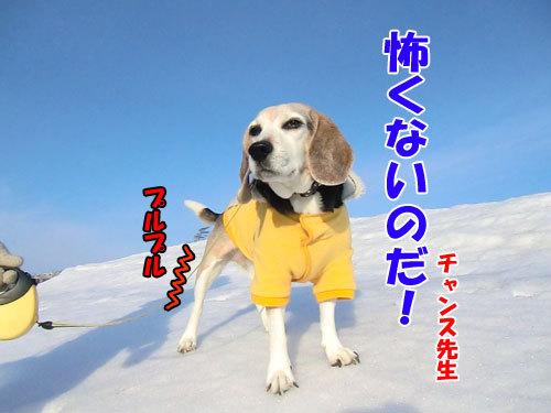 チャンスとティアラ+ココ-20130311-3-500.jpg