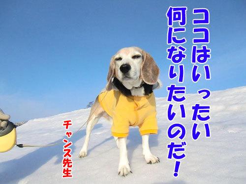チャンスとティアラ+ココ-20130311-5-500.jpg