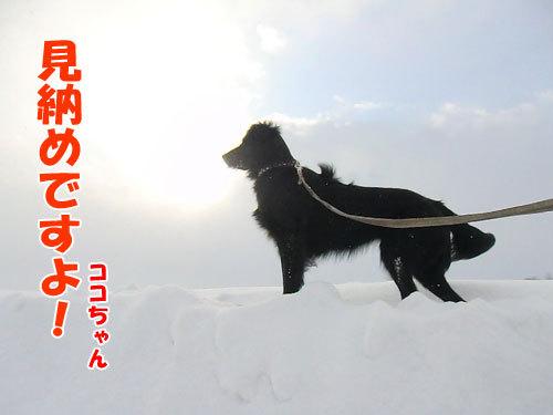 チャンスとティアラ+ココ-20130314-1-500.jpg