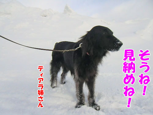 チャンスとティアラ+ココ-20130314-2-500.jpg