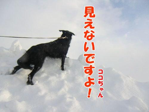 チャンスとティアラ+ココ-20130314-4-500.jpg