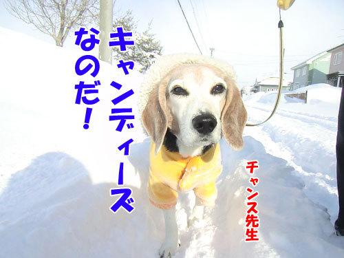 チャンスとティアラ+ココ-20130314-6-500.jpg