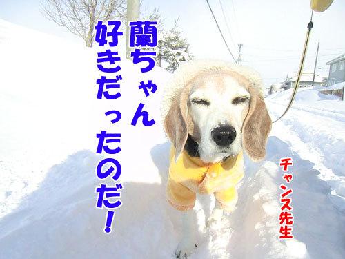 チャンスとティアラ+ココ-20130314-7-500.jpg