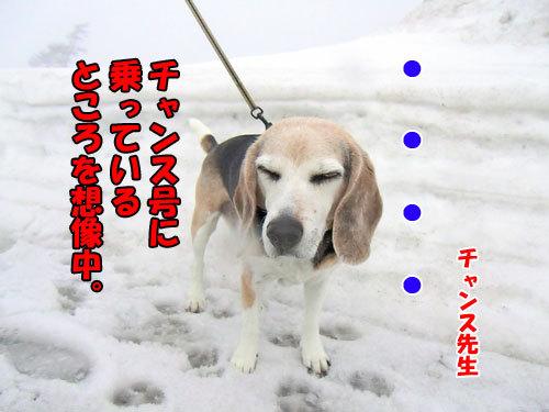 チャンスとティアラ+ココ-20130320-6-500.jpg