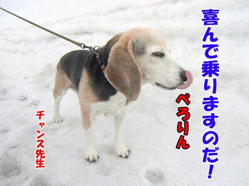 チャンスとティアラ+ココ-20130320-7-500.jpg