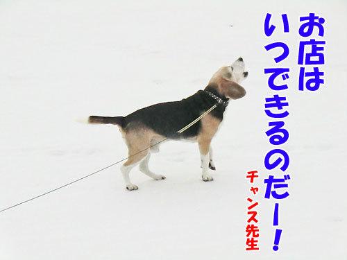 チャンスとティアラ+ココ-20130321-4-500.jpg