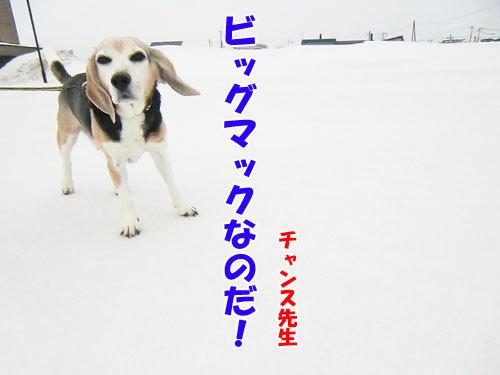 チャンスとティアラ+ココ-20130321-5-500.jpg