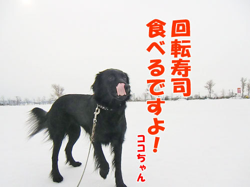 チャンスとティアラ+ココ-20130321-6-500.jpg