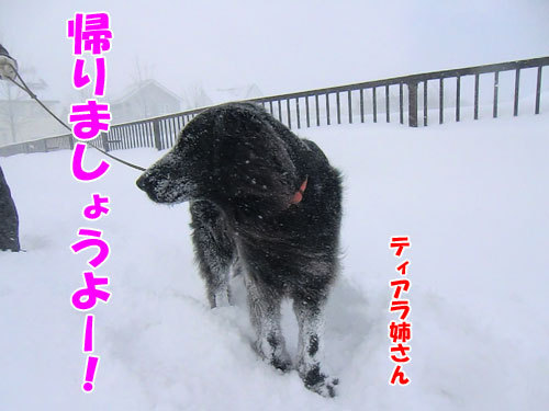 チャンスとティアラ+ココ-20130323-2-500.jpg