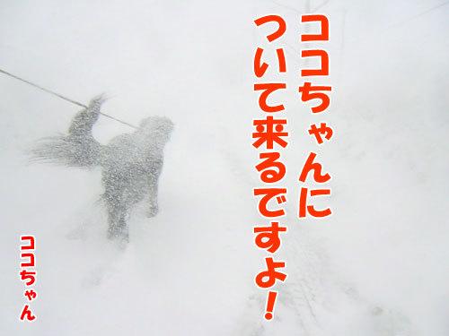チャンスとティアラ+ココ-20130323-4-500.jpg