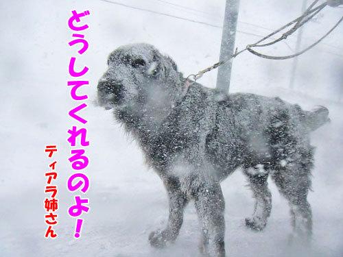 チャンスとティアラ+ココ-20130323-5-500.jpg