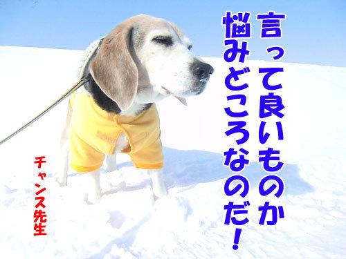 チャンスとティアラ+ココ-20130324-3-500.jpg
