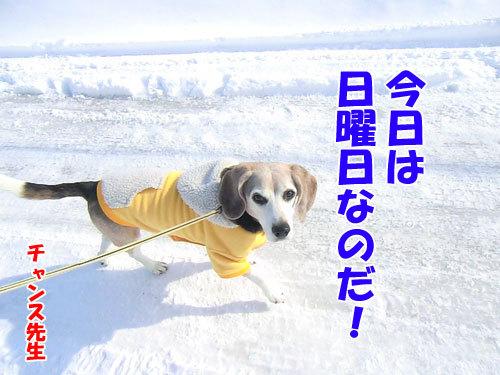 チャンスとティアラ+ココ-20130324-4-500.jpg