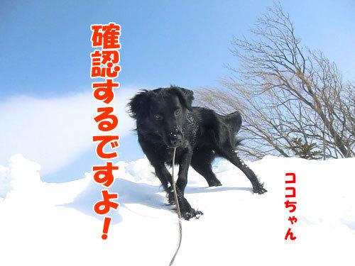 チャンスとティアラ+ココ-20130325-3-500.jpg