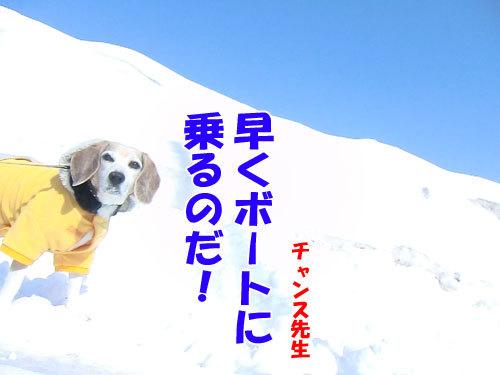 チャンスとティアラ+ココ-20130325-7-500.jpg